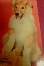 New ListingVintage Rough Collie Dog Puppy Post Card Ny 'The Line's Busy!' Dexter Press