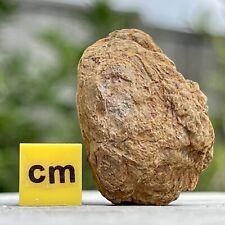 More details for coelophysis therapod dinosaur coprolite poo poop fse301 ✔100%genuine✔ukseller