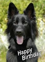 Alsatian / German Shepherd Dog A6 Textured Birthday Card BDGSD-18 paws2print