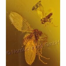 Bernstein Inkluse Inklusen Einschluss Insekt zwei Schmetterlingsmücken IN267