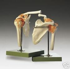 Shoulder Joint Anatomical Model SSM Fully Functional Professional LFA #2400 *