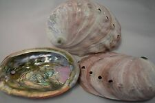 "Red Abalone Sea Shell One Side Polished Beach Craft 4"" - 5"" (3 pcs)"
