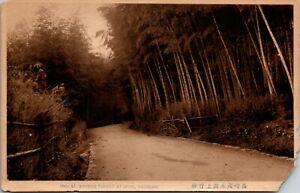 Vintage 1920's Bamboo Forest at Mogi Nagasaki Japan Postcard