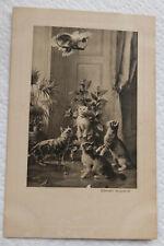 Carte postale chat  et perroquet  / Cat postcard and parrot