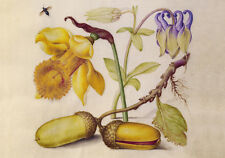 Circa 1592 Flemish Botanical Watercolor Flowers Painting Fine Art Canvas Print