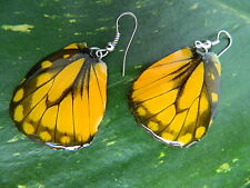 REAL SPOTTED SAWTOOTH Butterfly Wings Earring Jewelry 925 Sterling Hook Yellow!