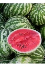 Watermelon Southeast Rose Seeds organic seeds non-GMO seeds Ukraine 3 g