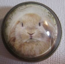 """GLASS DOME PICTURE BUTTON  LITTLE BROWN LOP-EARRED RABBIT w """"LACY"""" plant BORDER"""
