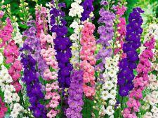 Seeds Delphinium Gaint Tall Mix Flower Annual Outdoor Garden Cut Organic Ukraine