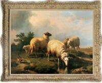 Hand painted Old Master-art Antique Oil painting Animal Portrait sheep on canvas