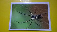 Figurina BILLA Sticker der Tierischer Rekorde n°162 SEIDENSPINNE Ragno Spider