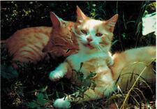 KISS AND HUG ! Cute red kittens Modern Russian postcard