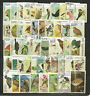 BIRDS Collection Packet of 50 Different WORLD Stamps