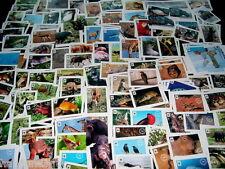 10 Tiersticker FREIE AUSWAHL Tiere weltweit 2012 EDEKA WWF Tierbilder Album