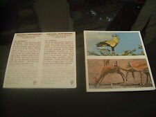 Natural Neighbours Double Card Full Set By Brooke Bond