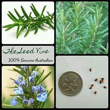 20 ORGANIC ROSEMARY SEEDS (Rosmarinis officinalis) Herb Popular Cooking Edible