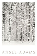 PINE FOREST IN THE SNOW POSTER BY ANSEL ADAMS Yosemite National Park trees print