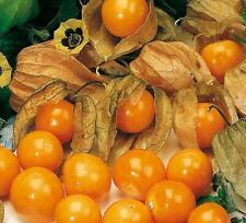 Retour concombre Diamant f1 10-12 plantes salade graines semences sämerei concombres parterre