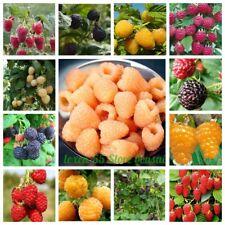 50 Raspberry Fruit Seeds Rubus idaeus Rare 26 Kinds Juicy Delicious Garden Plant