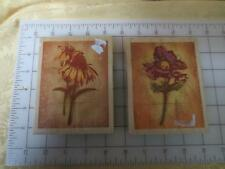 2 Paper Inspirations floral flower rubber stamps  Anemone Fresco & Coneflower