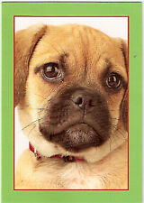 Pug Puppy Christmas Cards - Box of 18