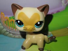 "Petshop Chat Europeen* Pet shop Kitty Cat #3573 ""Port gratuit/Free shipping""NEUF"