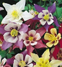 500 Columbine Seeds Mckanas Giant Flower Seeds