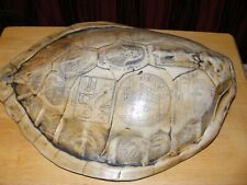 More details for taxidermy turtle shell.scrimshaw.faux.(not real),great display,rare item,repro.
