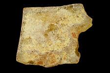 """Copal Amber 2"""" Natural Chakra Healing Crystals Rough Gemstone Raw Rock Mineral"""