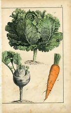 1872 CABBAGE CARROT KOHLRABI RADISH Antique Hand Colored Print Schreiber