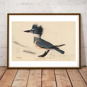 JOHN AUDUBON NATURE BIRDS BELTED KINGFISHER 34X19 INCHES ART PRINT