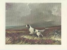 English Setter Dogs 8 New Note Cards by Ruben Ward Binks 1931 Beautiful Drawing