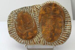 Trilobite Plate Large display item.