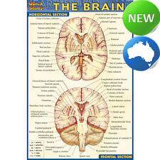 QuickStudy Guide Pocket The Brain: Reference Guides by BarCharts [Laminated]