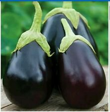 (Buy 1pack & get 1 pack free)Vegetable Seeds Brinjal Seed 70 seeds pack