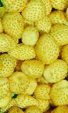 🍓 50 Samen Gelbe Erdbeere Yellow Wonder Fragaria aromatische Früchte