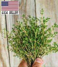 1000++ seeds Thyme Thymus vulgaris  herb ez grow NON-GMO Heirloom Fast ship !