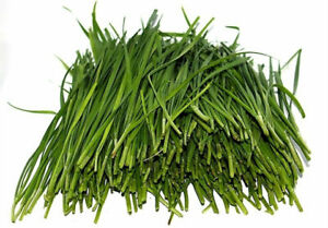 Chinese CHIVES Garlic 100+ Seeds Organic Vegetables Garden Home stir fry(北方韭菜)