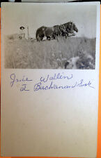 Lady, Horse Drawn Wagon, BUCHANAN, Saskatchewan, CANADA, Photo Post Card 1905-15
