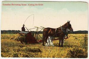 FARM HORSES - Canada Harvesting Scene - Cutting The Grain - c1900s era postcard