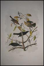 1860 Original Audubon Bien Rusty Gracke Blackbird 222