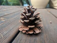 """Pacific Northwest Oregon Pinecones approximately 3"""" to 4"""" Great for crafts"""