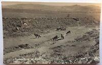 Dartmoor Ponies Near Vixen Tor Real Photo Postcard