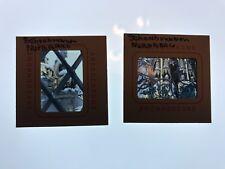 Lot of 2 Vintage Anscochrome Slides 1950s Schonbrunn Nuremberg