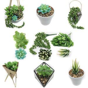6 x Artificial Plastic Fake Succulents Plants Flowers Sempervivum Faux Set Of 6