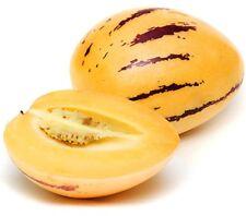PEPINO Solanum muricatum sweet melon tasting fruit plant in 100mm pot