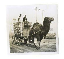 Norris & Rowe Circus - Camel with Wagon - Vintage Snapshot - Los Angeles - 1908