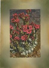 VINTAGE SEMPERVIVIUM LIVEFOREVER HOUSELEEK COLLAGE PICTURE ART PRINT W/  PASTELS