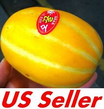 35 PCS Neungju Gold Value Melon Seeds E57, Chilsan Korean Sweet Melon  US Seller