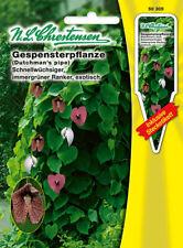 Planta FANTASMA, semillas, aristoloquia Littoralis, Flor, chrestensen, SP